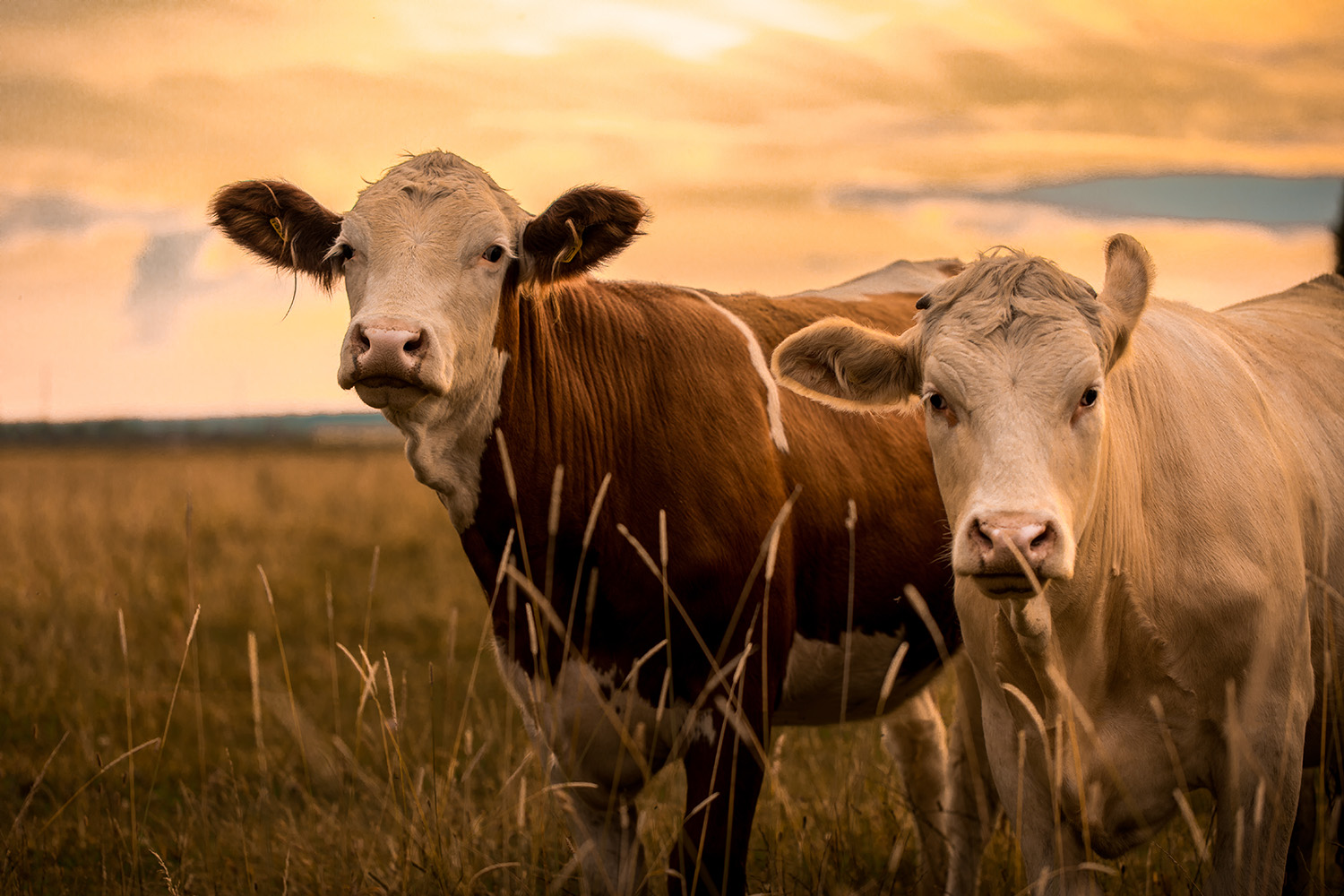 The Justice Department has issued civil subpoenas to JBS, Tyson, Cargill, and National Beef Packing regarding beef packing purchasing and selling information